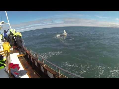 Salka Whale Watching Húsavík Iceland