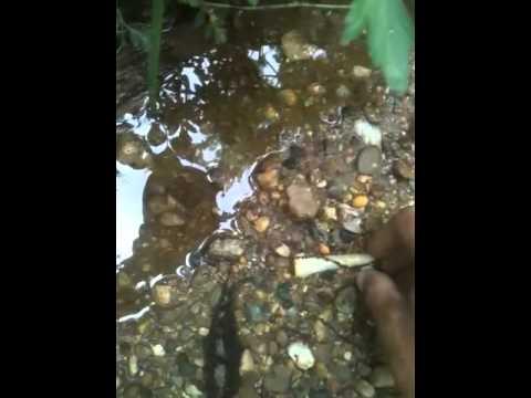 Killer!!!Drill, arrowhead hunting, Illinois, creeks