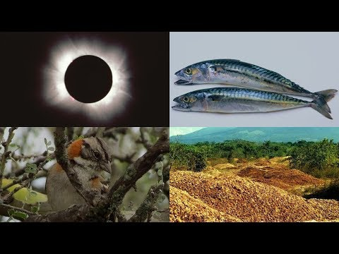 Orange Peel Jungle, Eclipse Chasers, and More: 60 Second Science Podcasts