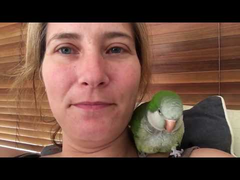 Morning cuddle with Mum - Quaker parrot talking chatterbox