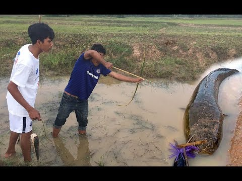 Fishing | Fish Hunting Using Hand Made Bamboo Arrow | Country Fish Catching From Village Canal