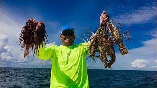 Download Lobster Tail and Lionfish Ceviche {Catch Clean Cook} Gourmet Tasty Tuesday!!! Video