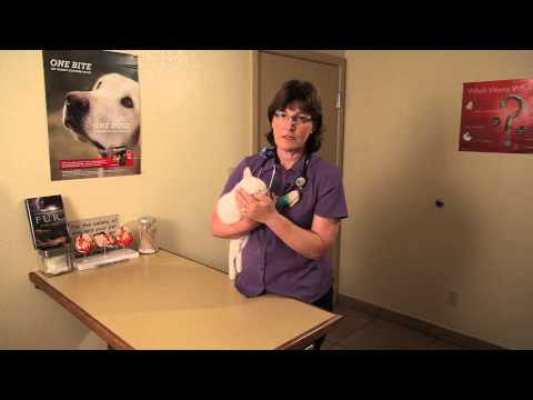 Cold Symptoms in Kittens : Cat Health