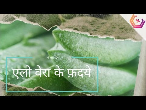 Aloe Vera in Hindi - Benefits and Uses of Aloe Vera Juice and Gel