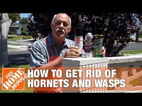 How To Get Rid of Hornets and Wasps - The Home Depot