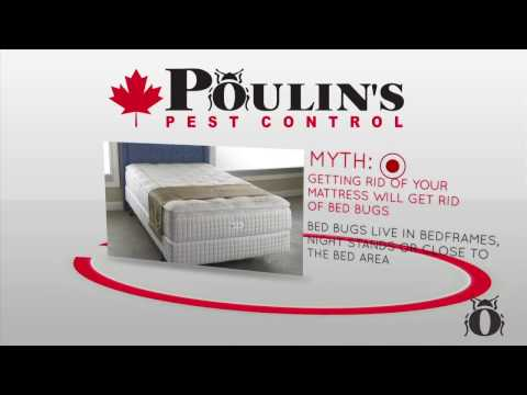 Common Bed Bug Myths