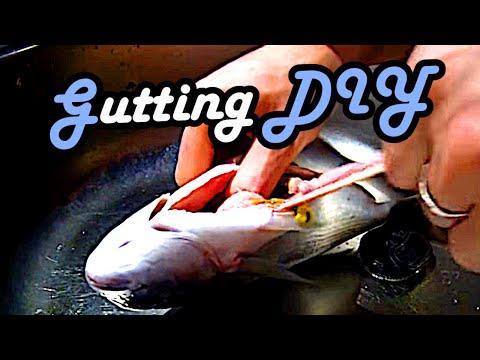 Cooking - How to gut and gill a Fish - (Fisch ausnehmen)