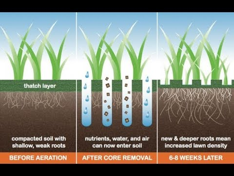 Don't over seed or Aerate your Bermuda Lawn!!