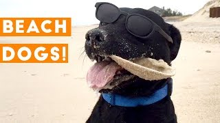 Funniest Dogs at the Beach Compilation 2018   Funny Pet Videos