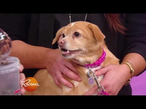 How to Help Your Dog Lose Weight | Rachael Ray Show
