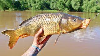 USING Carp As BAIT For PREHISTORIC Fish!