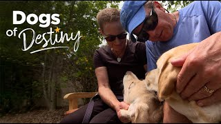Love at First Sight | Dogs of Destiny