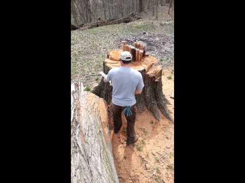 Flat Topping a tree stump