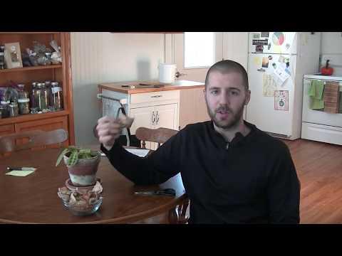 Green Tea Fertilizer For House Plants