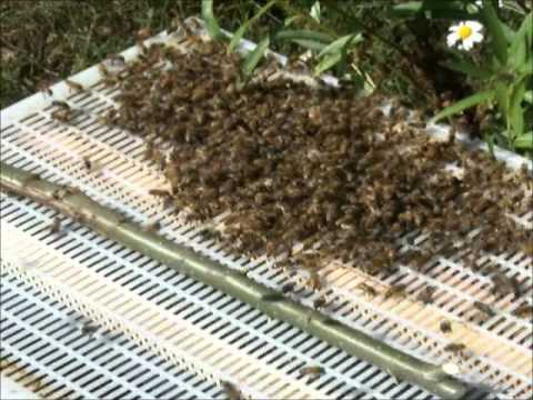 How To Prevent Honeybees From Swarming
