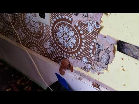 Removing three layers of wallpaper with just pure vinegar. Let it really soak well.