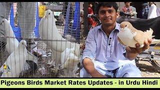 Delhi jama masjid sunday kabutar market 2018 | 06-05-2018