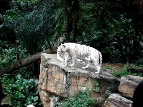 Sentosa Island-Singapore Zoo (Part 14)