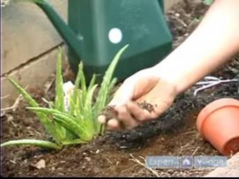 How to Grow an Herb Garden Indoors or Outdoors : Proper Drainage: Growing an Herb Garden