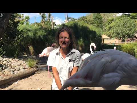 Why I love Auckland Zoo with our bird keepers