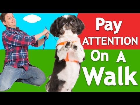 How to Teach ANY Dog to Walk Nicely on Leash!