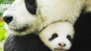 """Meet the cutest Panda Cubs """"Ya Ya & Mei Mei"""" from Disneynature"""