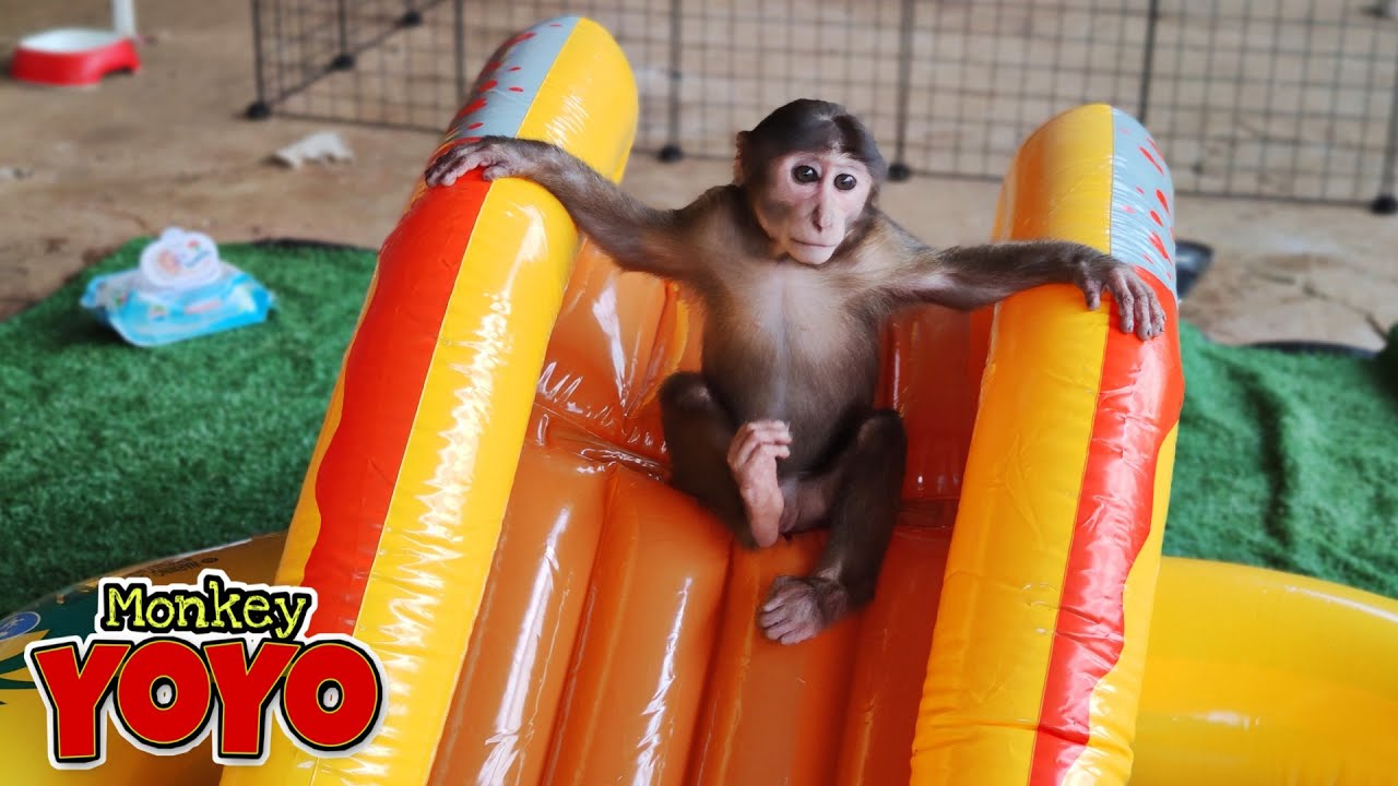 YoYo JR plays with the new swimming pool