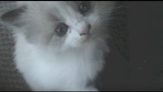 A Different Point of View - Sad Animal Story (Mercutio the Kitten) This might make you cry.