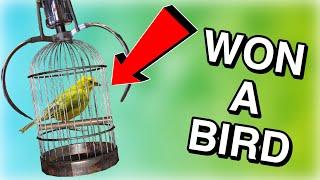 WON A BIRD FROM A CLAW MACHINE!