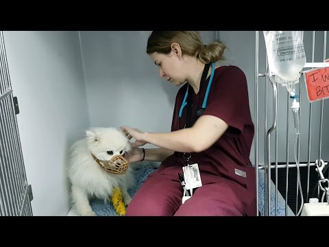 Inside ARH - Part 2 How Passion Gets Results - ARH Vet Nurse Jess Thorpe