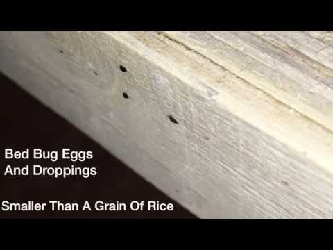 How To Find Bed Bug Poop