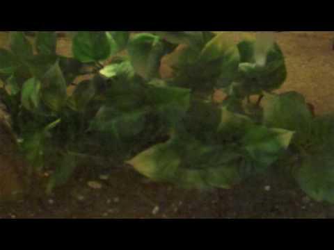Mediterranean gecko: Setup