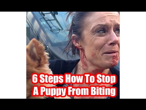 6 Steps How To Stop A Puppy From Biting