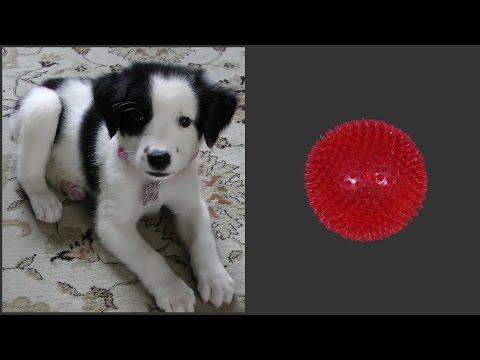 Puppy vs Ball