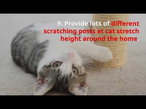 10 top tips for indoor cats