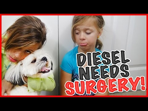 🐶DIESEL GOES TO THE VET🐶HE NEEDS SURGERY!! | SMELLY BELLY TV | FAMILY VLOG