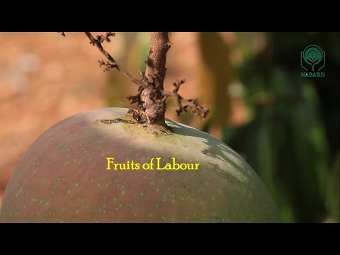 Fruits of Labour