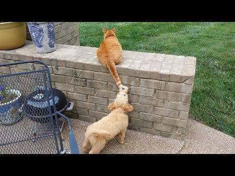 Puppy Trying To Catch Cat's Tail.