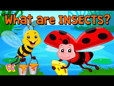 Learn About Insects   Song & Activity   Preschool   Kids   Kindergarten