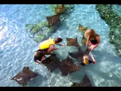 Discover a whole world of experiences at Discovery Cove in Orlando
