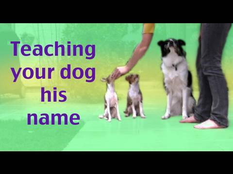 How to teach your dog his name