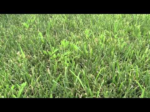 Athletic Field Fall Turf Maintenance Program