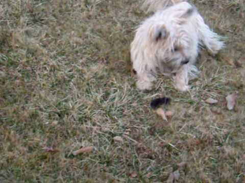 Gus kills a rodent