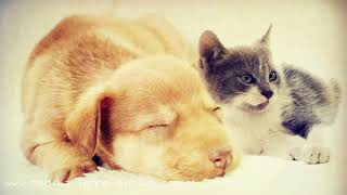 Pet Anxiety Relief: Relaxation Sounds of Nature for Calming Cats & Dogs