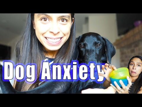 Dog Anxiety Training  |  DIY Brain Games for Dogs