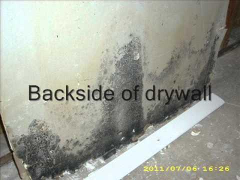 Drywall Tips - Preventing Black Mold
