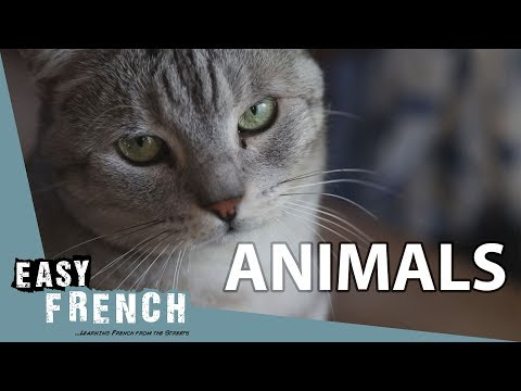 Animals | Super Easy French 32