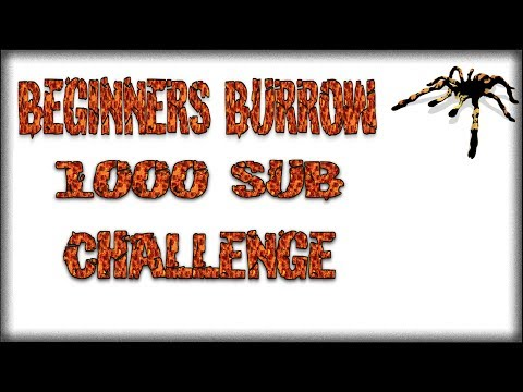 A Challenge to the Community - Beginners Burrow