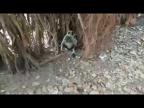 LOCAL DISCOVERY  wildlife of monkey.