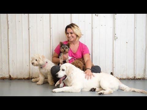 Bark n' Roll: A Dog Obedience School that Rocks